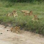Summit Tours and Safaris Day Safari