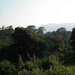 Vista desde la terraza de la habitación al bosque de alta montaña.