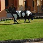 vache dans le jardin
