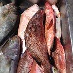 Fresh Fish prior to Ice
