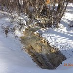 The Rambling Brook running thru the property
