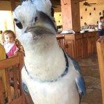 restaurant visitor