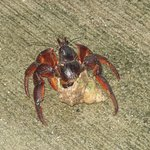 Friendly crab outside.