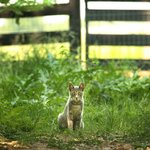 Play with the farm animals, including our barn cats.