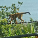 monkeys everywhere - this was at the pool