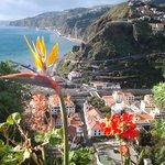 Frodig på Madeira også i januar