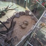 Iguanes sur des filets