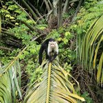 One of many monkeys we saw on this tour.