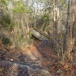 Baines Creek Trail crossing the creek/slough