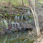 Icicles along creek Baines Creek Trail
