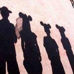 WDW Shadows