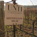 Montepulciano makes great Segromigno!