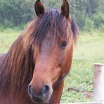 Trigger. a great little trail horse!