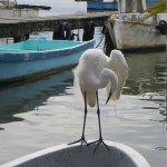 Our egret visitor