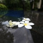 Kamuela Sanur - Bali, Indonesia - The Travel Glow - flowers in the pool