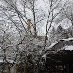 Foto de Hakuba Hifumi