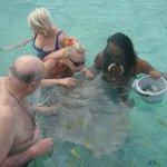 baignade avec les raies et requins pointes noires