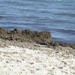 Filthy Beach