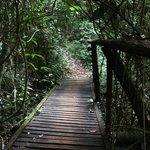 Caminho para a cachoeira