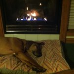 Daisy loves the fireplace!!