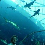 tunnel degli squali