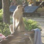 la parade des singes