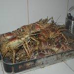 No dia que encomendamos lagosta