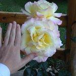 Tamaño proporcional al perfume y cantidad por planta