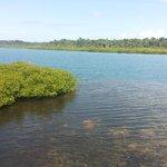 Mar, manglares y corales