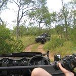 Range Rovers in the bush