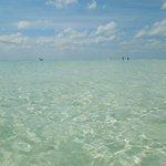 Seawater at Avalon Reef Club