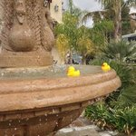 A couple free loaders taking a dip in our fountain!
