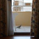 bird visits