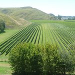 Mission, view of vineyards