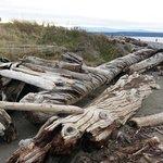 Amazing driftwood.