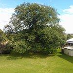 Garden View of Tree!
