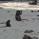 Those Pesky Monkeys - Drinking from a Water bottle