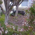 Hillside in back of multi-million $$ home behind hotel - see black tubing