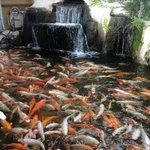 """Koi pond with fountain at entrance to """"Ling's Buffet""""  Humble, Tx"""