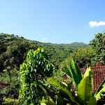 A view into the surrounding area. Go for a walk in the jungle and enjoy.
