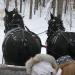 Horse driven Wagon Ride
