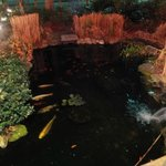 Fish pond in front of restaurant