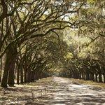 Wormsloe - Live Oak Avenue
