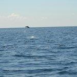 dauphin lors de la sortie a isla cano