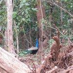 In Kuldiha Forest