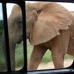 ...so viel zu unserer Frage, wie nahe kommen denn die Tiere?