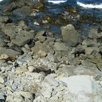Seals near to the Point