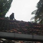 le toit des chambres