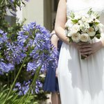 Front Garden: Wedding Photos: Society Photography