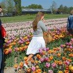 Private Tulip Photo Excursion